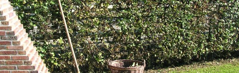 Jardin service eco entretien de jardin pour les for Entretien jardin 76